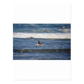 Seagull & Oregon Surf Postcard