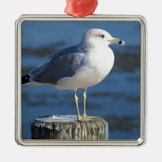 Seagull Square Metal Christmas Ornament