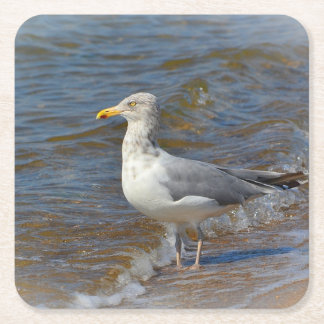 Seagull Party Coaster