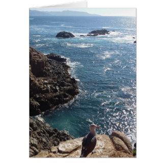 seagull pelican beach mexico tijuana geiser card