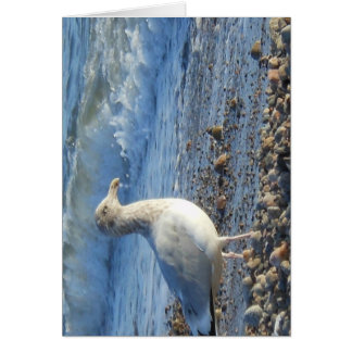 Seagull photo card