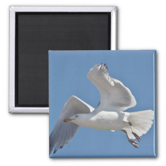 Seagull photo on magnet