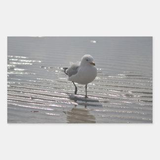 Seagull photo rectangular sticker