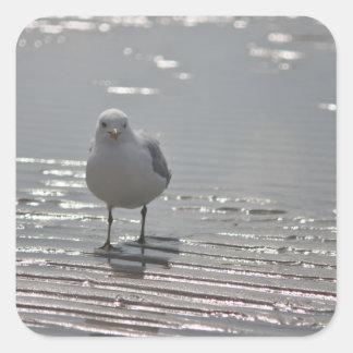 Seagull photo square sticker