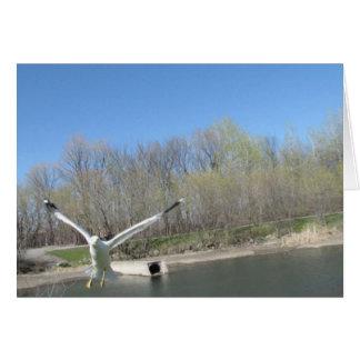 Seagull Photograph Card