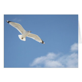 Seagull photography card