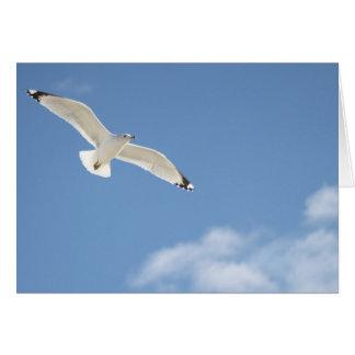 Seagull photography card