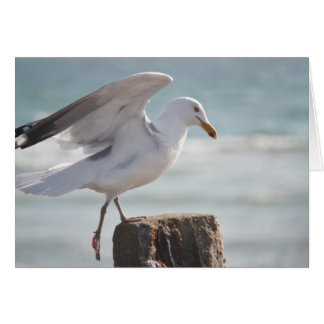 Seagull photography greeting card