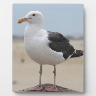 Seagull Plaque