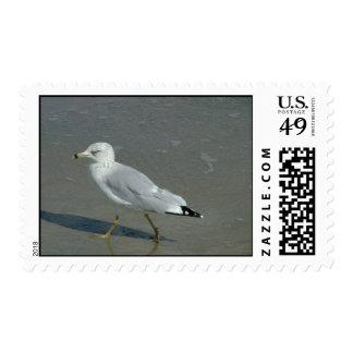 Seagull Postage
