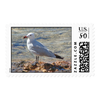 Seagull - Postage