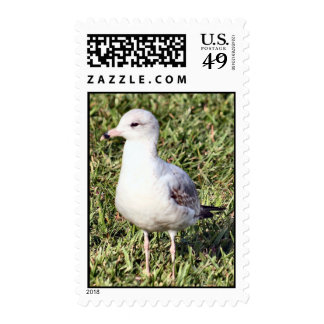 Seagull Postage Stamp Stamp