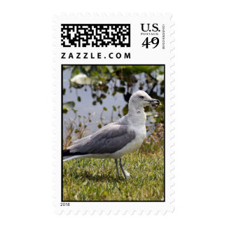 Seagull Postage Stamps Stamps