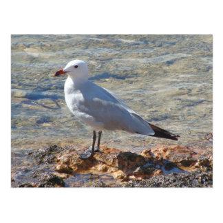 Seagull - Postcard