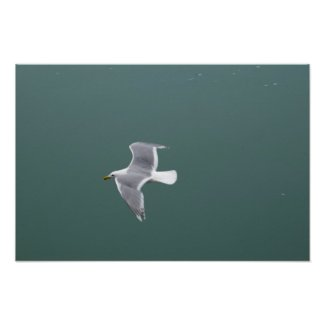 Seagull Poster 1 print