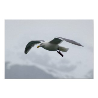 Seagull Poster 2 print