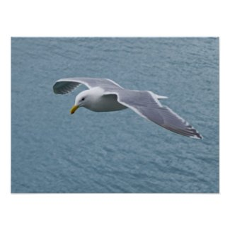 Seagull Poster 5 print