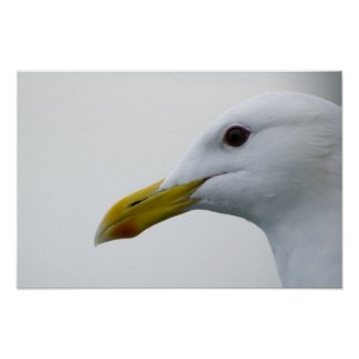 Seagull Poster 6 print