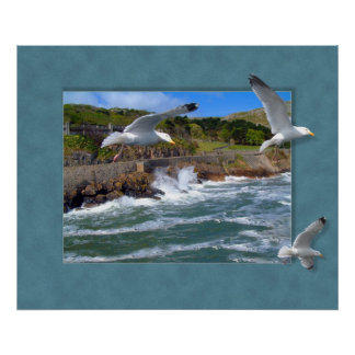 Seagull Scape Posters