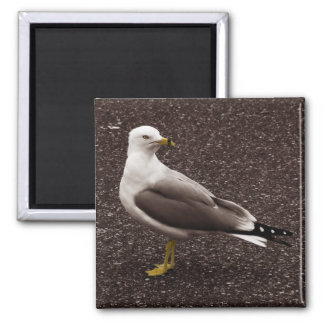 Seagull - Selective Color Sepia Photo 2 Inch Square Magnet