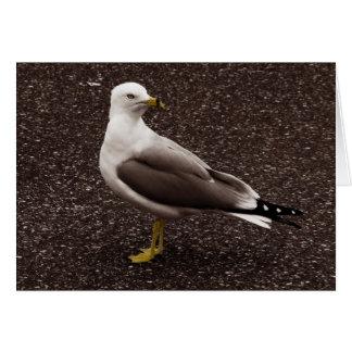 Seagull - Selective Color Sepia Photo Card