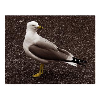 Seagull - Selective Color Sepia Photo Postcard