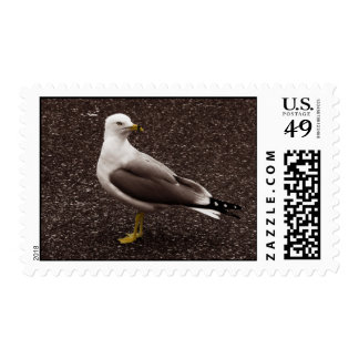 Seagull - Selective Color Sepia Photo Stamp