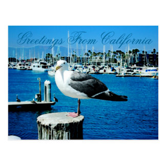 Seagull Shores Postcard from California