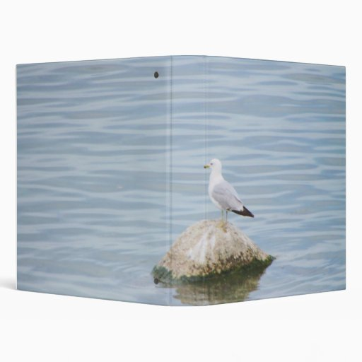 Seagull sitting on a Rock 3 Ring Binder