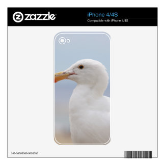 Seagull Skins For The iPhone 4