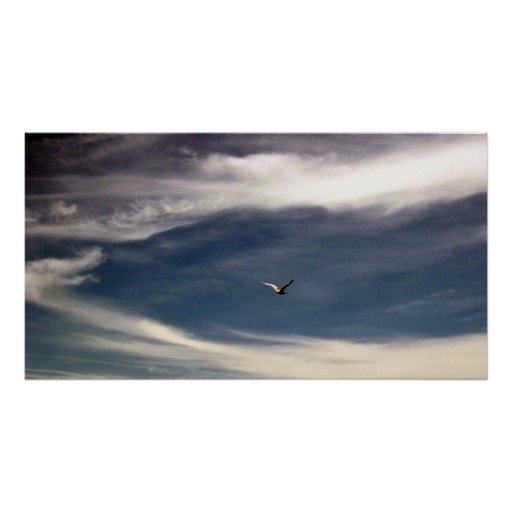 Seagull Sky Poster