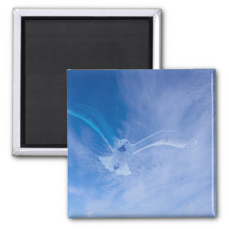 Seagull Soaring 2 Inch Square Magnet