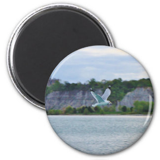 Seagull soaring across the lake magnet