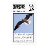 Seagull,  stamps
