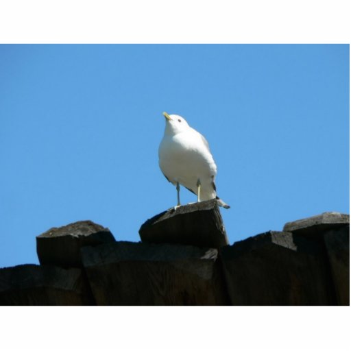 Seagull Standing On Dock Cut Outs