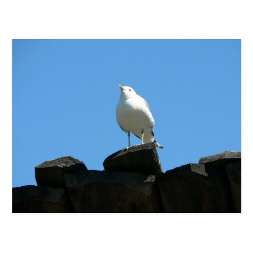 Seagull Standing On Dock Post Cards