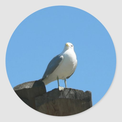 Seagull Standing On Wood Sticker