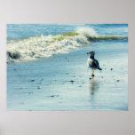 Seagull Stroll Poster Print