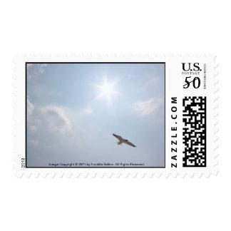 Seagull & Sun Stamp