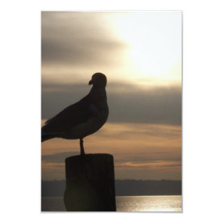 Seagull Sunrise Sympathy cards