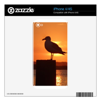 Seagull Sunset Decals For iPhone 4