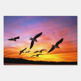 Seagull Sunset - Flying Gulls at Sunset Signs
