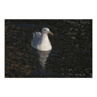 Seagull Swim fine art print