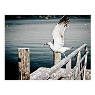 Seagull taking off the rails postcard