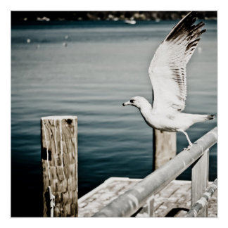 Seagull taking off the rails poster
