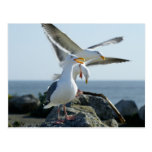 Seagull Trio Postcard