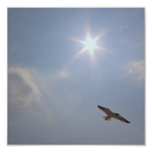 Seagull Under the Sun Mini-Poster