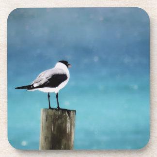 Seagull View Coaster