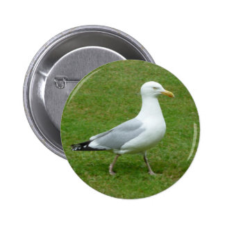 Seagull walking in the Park Button