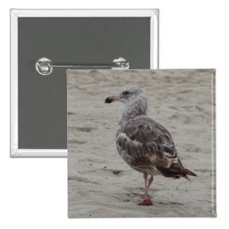 Seagull walking in the sand pinback button